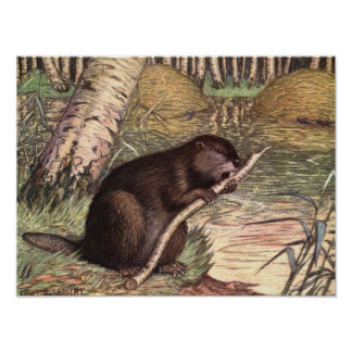 Vintage Wild Animals, Beaver by Louis Sargent Poster