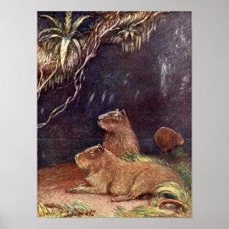 Vintage Wild Animals, Capybara by Louis Sargent Poster