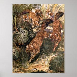 Vintage Wild Animals, Dholes, Wild Dogs by Austen Poster