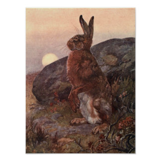 Vintage Wild Animals, Hare by Winifred Austen Poster