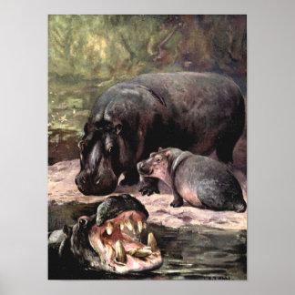 Vintage Wild Animals, Hippopotami by CE Swan Poster