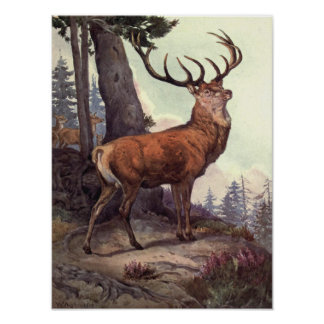 Vintage Wild Animals, Red Deer by Winifred Austen Poster