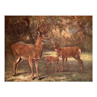 Vintage Wild Animals, Virginian Deer by CE Swan Poster