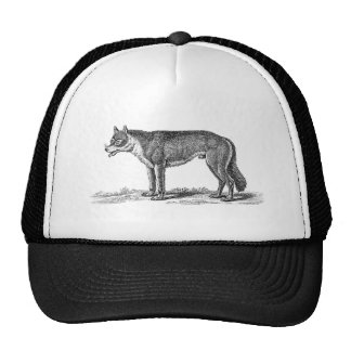 Vintage Wolf Illustration - 1800's Wolves Template Hat