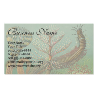 Vintage Worms Annelids Chaetopoda by Ernst Haeckel Pack Of Standard Business Cards
