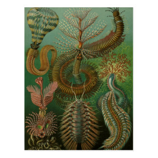 Vintage Worms Annelids Chaetopoda by Ernst Haeckel Postcard