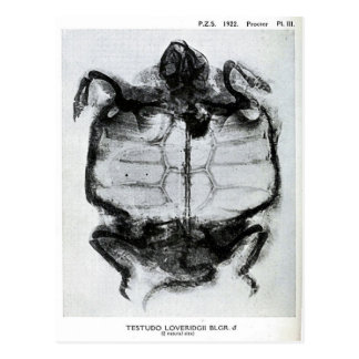 Vintage X-Ray of Turtle Postcard