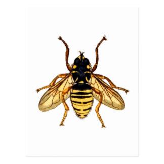 Vintage Yellow Bee Postcard