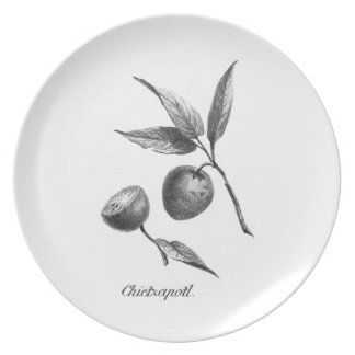 Vintage zapote exotic fruit etching plate
