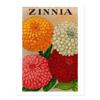 vintage zinnia seed packet postcard