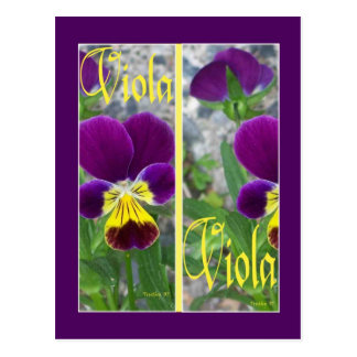 VIOLA BOOKMARKS POSTCARD