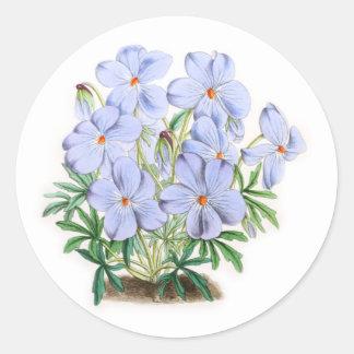 Viola Pedata Sticker