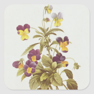 Viola Tricolour Square Sticker
