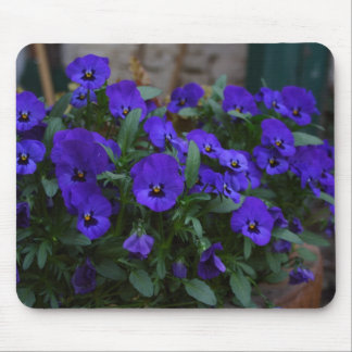 Viola wittrockiana mouse pad