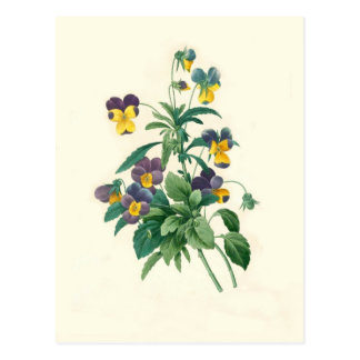 Violas by Pierre-Joseph Redouté Postcard