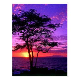 Violet and Pink Sunset Tree Postcard