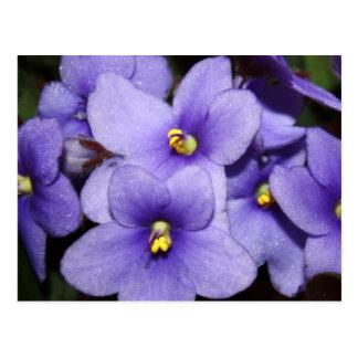 Violet Boquet Postcard