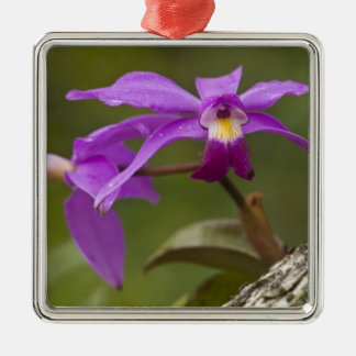 Violet Cattleya Orchid Cattleya violacea) Silver-Colored Square Decoration
