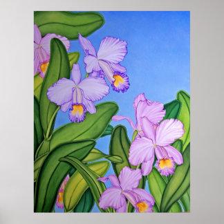 Violet Cattleya Orchids Poster