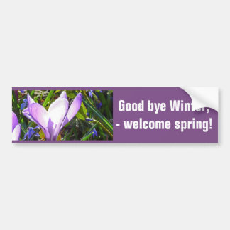 Violet crocuses 02.2, spring greetings bumper sticker