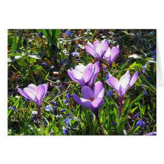 Violet crocuses, spring greetings card