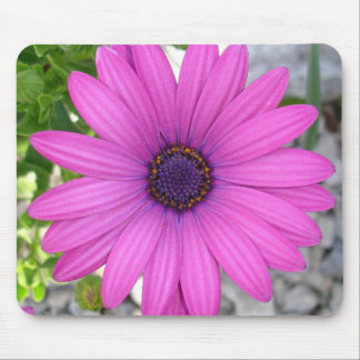 Violet Pink Osteospermum Flower Daisy Mouse Pad