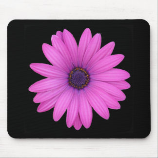 Violet Pink Osteospermum Flower Isolated on Black Mouse Pad