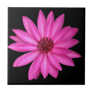 Violet Purple Pink Lotus Flower Black Tile
