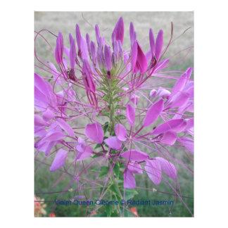 Violet Queen Cleome Flyer Design