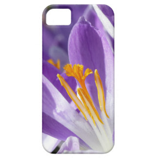 Violet spring crocus iPhone 5 case