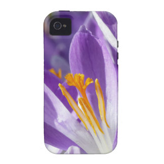 Violet spring crocus iPhone 4 cases