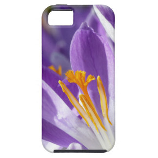 Violet spring crocus iPhone 5 covers