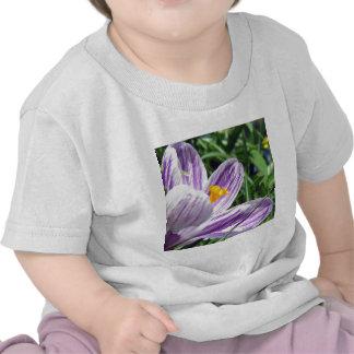 Violet spring crocus tee shirt