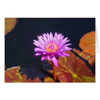 Violet Water Lily Greeting Card