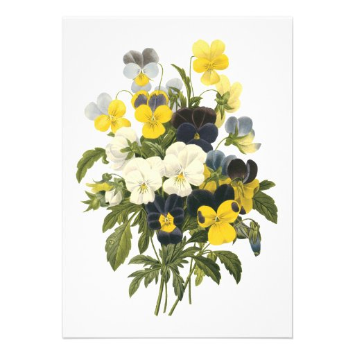 Violets and Pansy Flowers Botanical Art Announcement