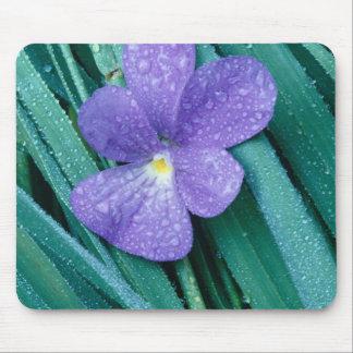 Violets R Blue Mouse Pads