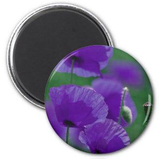 violett Mohn Art Magnete