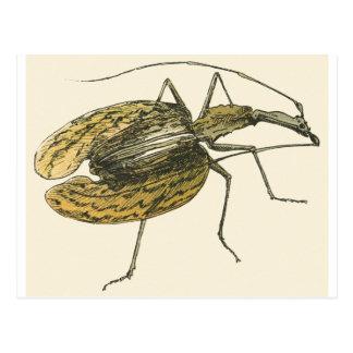 Violin Beetle Postcard