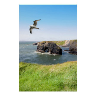 Virgin rock seagull in an updraught poster