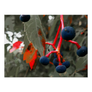 Virginia Creeper Fruit Print