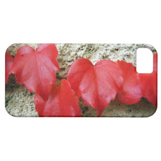 Virginia Creeper Leaves iPhone SE+5/5S Case