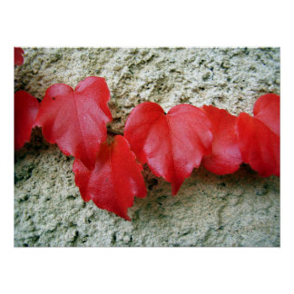 Virginia Creeper Leaves Poster