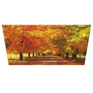 Virginia Fall Trees Stretched Canvas Prints