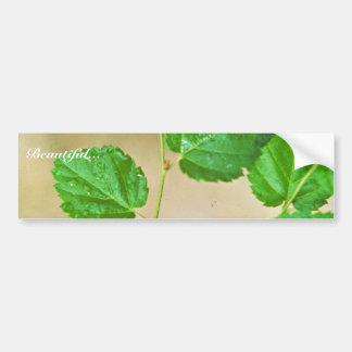 Virginia Round-leaf Birch Bumper Sticker