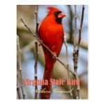 Virginia State Bird - Northern Cardinal Post Card