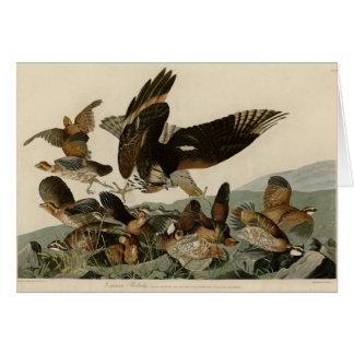 Virginian Partridge Greeting Card