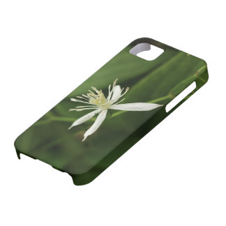 Virgin's Bower iPhone 5 Cover