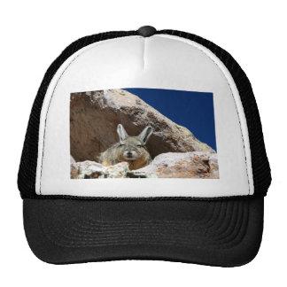 Viscacha sunbathing in the Atacama desert Chile Cap