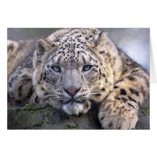 Vishnu Snow Leopard Card