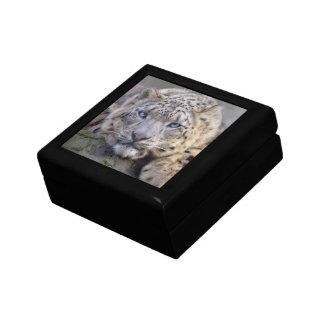 Vishnu Snow Leopard Gift Box